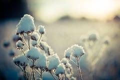 Schnee umfasste Niederlassung gegen defocused Hintergrund stockfotografie