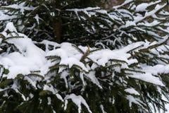 Schnee umfasste Niederlassungen eines gezierten Baums im Winter Stockbild