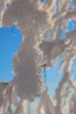 Schnee umfaßte Baumzweige Stockbilder