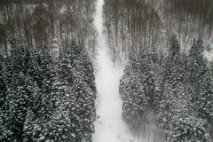 Schnee und Bäume Lizenzfreie Stockfotos