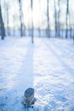 Schnee und Bäume Stockfotos