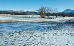 Schnee und Bäume stockfotografie