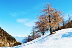 Schnee und Bäume in den Schweizer Alpen stockfoto