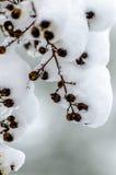 Schnee und braune Samen Stockbild