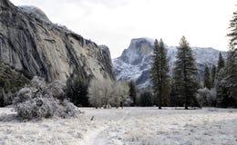 Schnee und Eis bedeckten Bäume Stockbilder