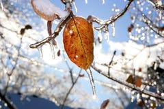 Schnee-und Eis-Sturm Lizenzfreie Stockfotografie