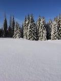 Schnee und Fichte Stockbild
