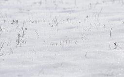 Schnee und Gras Stockfotos