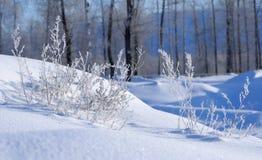 Schnee und Gras im Frost Stockbilder