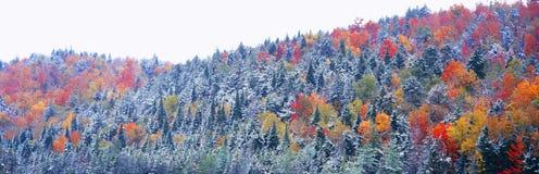 Schnee- und Herbstbäume, Stockbild