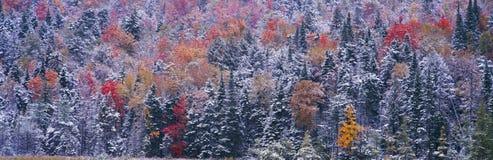 Schnee- und Herbstbäume, lizenzfreies stockbild