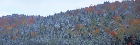 Schnee- und Herbstbäume, Lizenzfreies Stockfoto