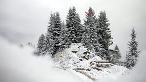 Schnee und Kiefer Stockfotos