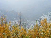 Schnee und Nebel Stockfoto