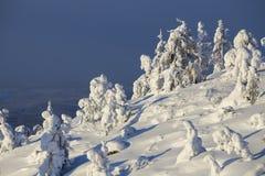 Schnee und snowcovered Bäume stockbild