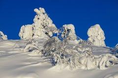 Schnee und snowcovered Bäume stockbilder