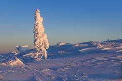 Schnee und snowcovered Bäume stockfotografie