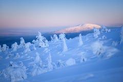 Schnee und snowcovered Bäume stockfotos