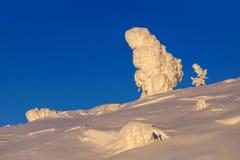 Schnee und snowcovered Bäume stockfoto