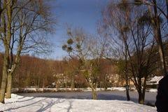 Schnee und sonnen- Landschaft winterlich - Frankreich Stockbild