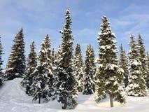 Schnee und Sonnenlicht auf Bäumen Stockfotos