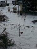 Schnee- und Vogelerinnern Stockfotos