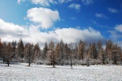 Schnee und Wald Lizenzfreie Stockfotografie