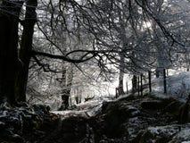 Schnee und Waldland auf Exmoor Stockfotografie