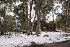 Schnee unter den Bäumen bei Hotham Stockfotos