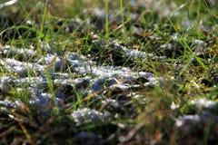 Schnee unter der Sonne und dem Gras Stockfoto