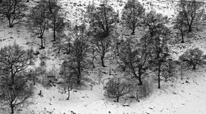 Schnee-unterstützt Stockbilder