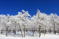Schnee-Wald Stockfotos