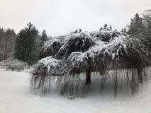 Schnee in Washington Park Arboretum 1 lizenzfreie stockfotografie