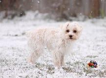 Schnee-Welpe Stockfoto