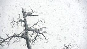 Schnee-Wirbelsturm stock video
