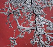 Schnee, Zweig und rote Wand Stockfoto