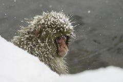 Schneeaffe, der Einfrieren das im Freien sitzt lizenzfreies stockbild