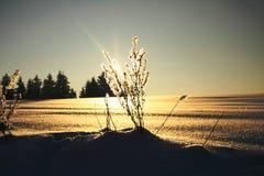 Schneeanlage im Sonnenuntergang Stockfotos