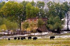 Schneeansicht des tibetanischen Dorfs am Shangri-La China Lizenzfreie Stockfotos