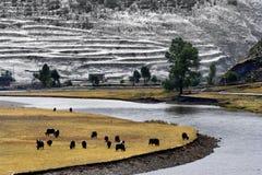 Schneeansicht des tibetanischen Dorfs am Shangri-La China Lizenzfreies Stockfoto