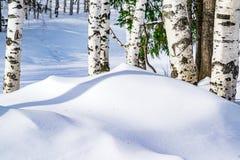 Schneeantriebe umrissen nach Schneesturm in einem natürlichen Birkenwald mit großen Schatten von den Bäumen belichtet durch die S Lizenzfreie Stockbilder