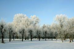 Schneeantriebe und -bäume Stockbilder