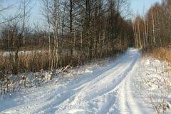 Schneeantriebe und -bäume Lizenzfreies Stockfoto