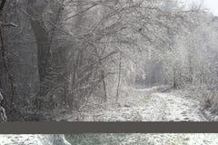 Schneeaufregung Lizenzfreies Stockbild