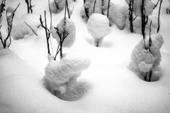 Schneebälle befestigt zu den Niederlassungen lizenzfreies stockfoto