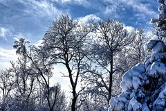 Schneebäume Lizenzfreies Stockbild