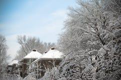 Schneebäume Lizenzfreies Stockfoto