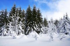 Schneebäume Stockfoto