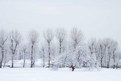 Schneebäume stockfotografie