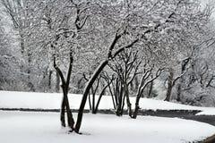 Schneebäume Stockbild